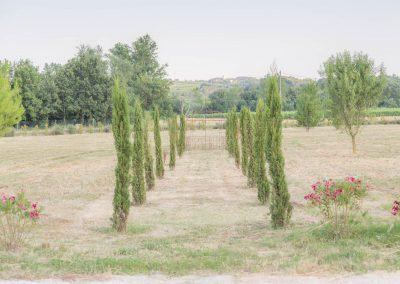 Allée de cyprès du jardin du mas d'élise